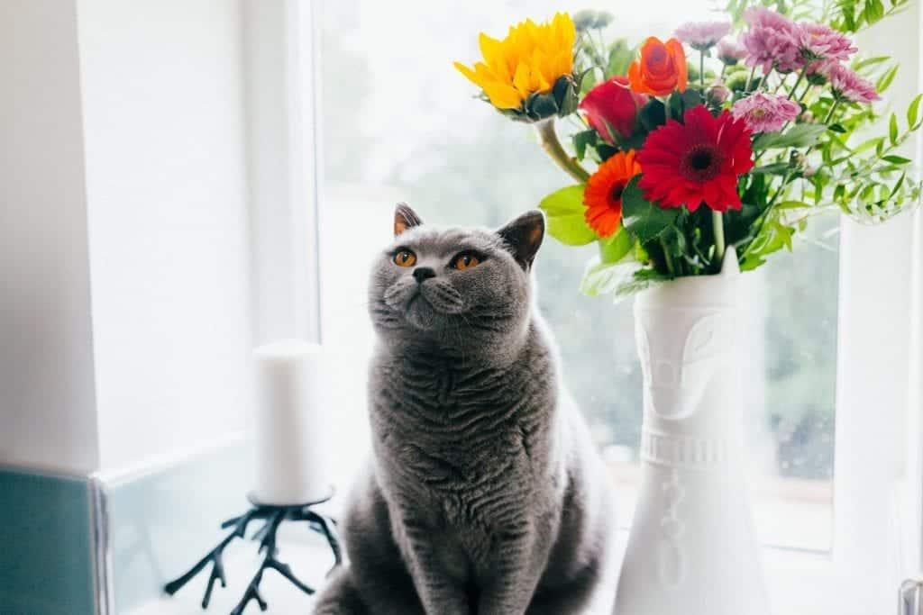pet window treatment blog