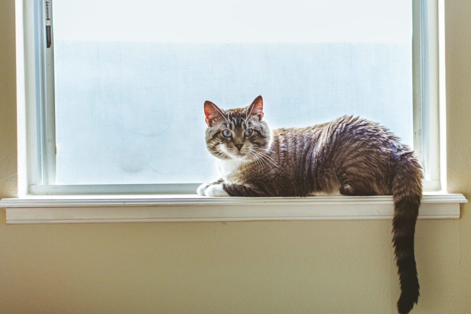 6 Child- and Pet-Safe Window Treatments
