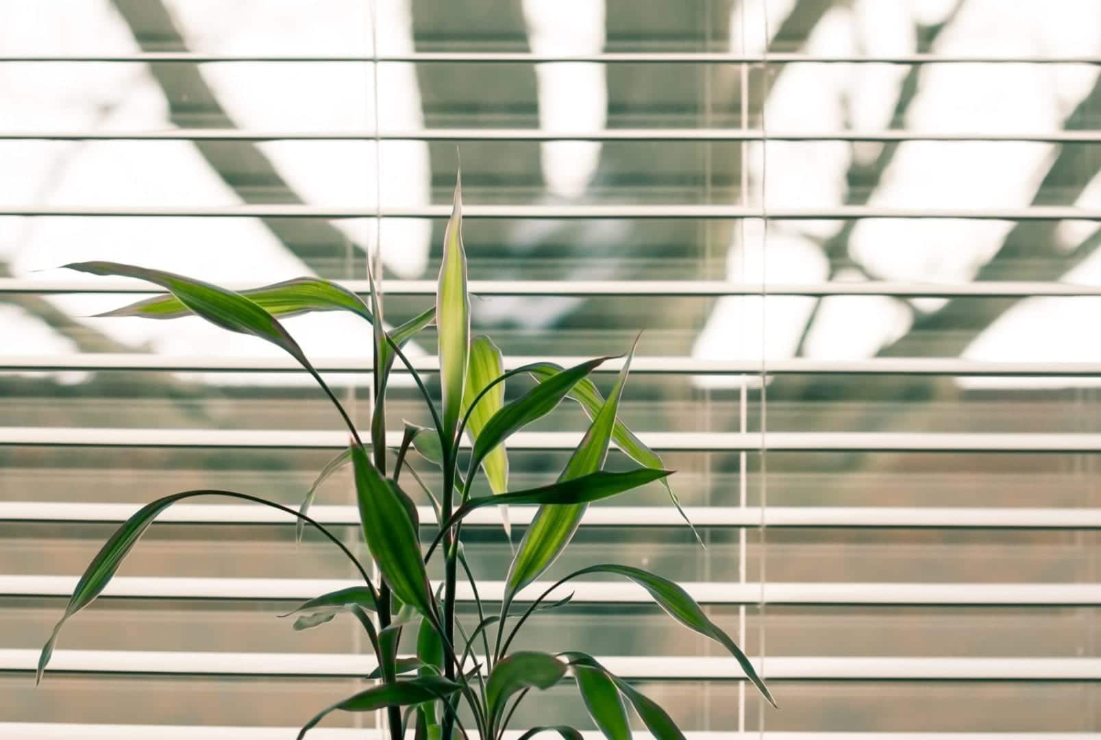 How to Clean Your Window Treatments